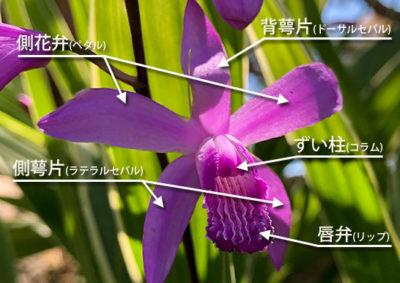 シランの花の構造