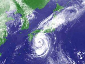 大事な庭を強風から守る…!庭木とバラの台風対策
