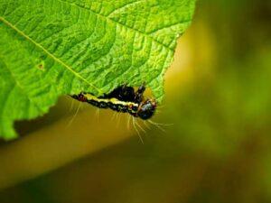 毛虫の種類と駆除方法