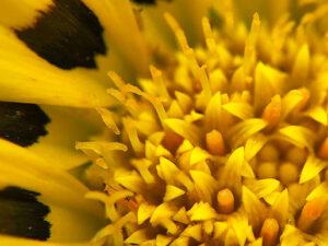 スマホレンズで撮る植物のマクロ写真